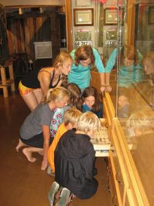 Children viewing insect collection at Lake Country Museum