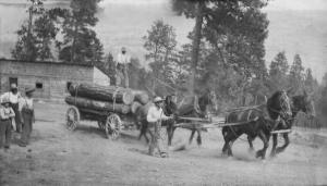 Load of logs from Winfield Flats