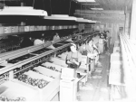 Packing line, VFU, Oyama.png