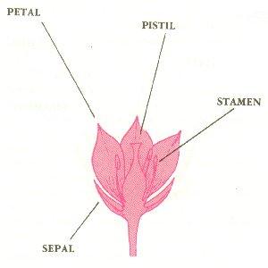 anatomy2
