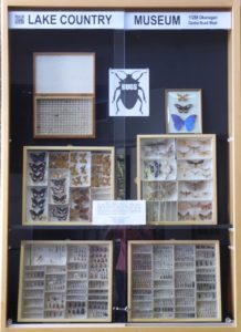 The Harvey Insect Collection