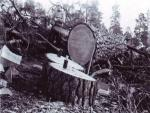 Cutting Pine with a crosscut saw.jpg