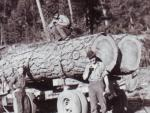 Load of logs.jpg